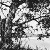 Благодатских М. «Дерево»