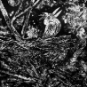 Джон Кудрявцев. «Луна и птица»