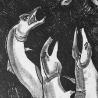 Владимир Позигун. Из серии «Рыбы»