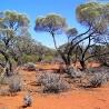 Соколов И. (Sinus). «Австралия»